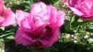 Парад тюльпанов Никитский  ботанический сад_18