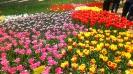 Парад тюльпанов Никитский  ботанический сад_25