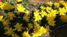 Парад тюльпанов Никитский  ботанический сад_46
