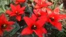 Парад тюльпанов Никитский  ботанический сад_5